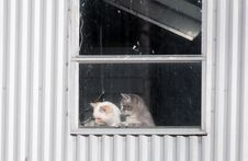 Free Two Kittens In A Window Stock Image - 7916371