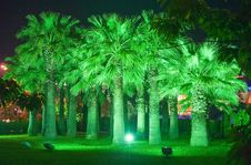 Free Night Park In Sochi City . Russia. Stock Photography - 7916392
