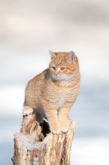 Free Kitten On A Tree Stump Stock Photos - 7916523