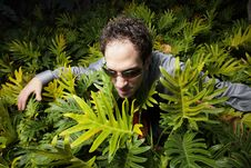 Free Businessman In Bushes Stock Photo - 7916780