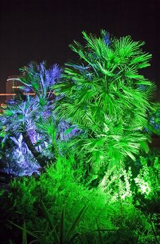 Free The Illuminated Palm Trees. Royalty Free Stock Image - 7916946