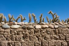 Free Old Brick Fence Decorated By Cactus Royalty Free Stock Photography - 7917507