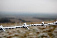 Free Frozen Barbed Wire Royalty Free Stock Photography - 7918447