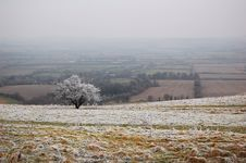 White Horse Hill Tree Royalty Free Stock Image