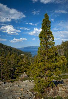Free Pine Tree Mountain Vista Stock Images - 7918904