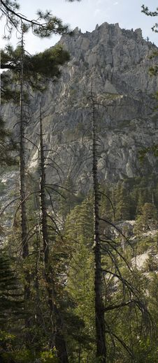 Free Mountain And Trees Royalty Free Stock Images - 7919049