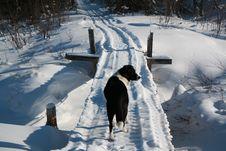 Free Dog And Bridge Stock Image - 7919231