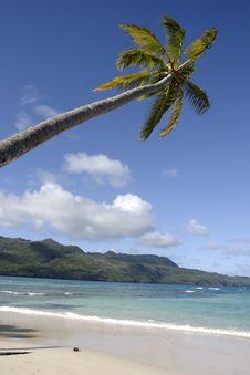 Free Beach Palm Stock Photos - 7919813