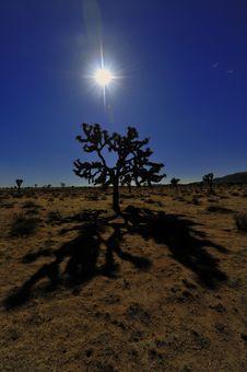 Free Joshua Tree Sunset Royalty Free Stock Photos - 7919888
