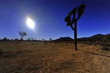 Free Joshua Tree Sunset Stock Photo - 7919900