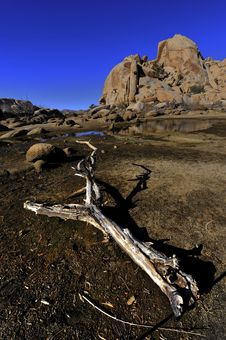 Free Old Bark In Joshua Tree National Park Stock Images - 7919974