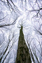 Free Frozen Winter Forest Royalty Free Stock Photos - 7921998