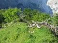 Free Green Alpine Slope Royalty Free Stock Photo - 7922395