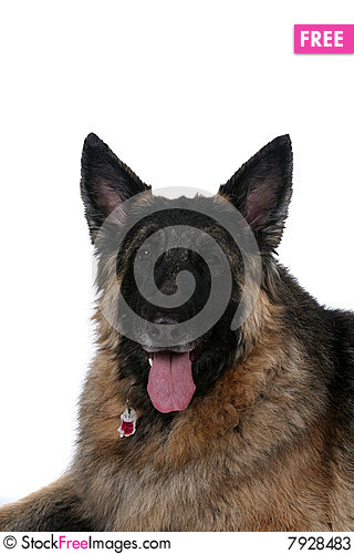 Free Big Dog With Black Face And Tongue Hanging Out Stock Photos - 7928483