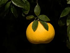 Free Close Up Of Tangerine Royalty Free Stock Photo - 7920035