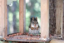 Free Squirrel Stock Photography - 7920082