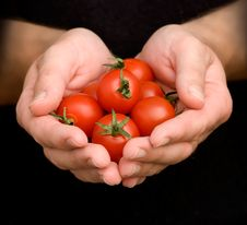 Free Hands With Cherry Tomates Royalty Free Stock Photo - 7920275