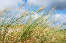 Free Dunes Grass Stock Images - 7920854