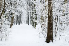 Free Winter Forest Stock Photos - 7921673