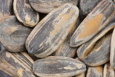 Free Sunflower Seeds Stock Image - 7921881