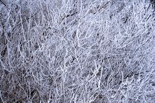Free Icy Branch Background Stock Images - 7922064