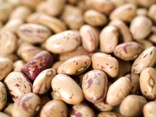 Free Kidney Beans Stock Photography - 7922432