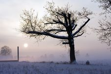 Free Winter Landscape Royalty Free Stock Photo - 7923385