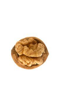 Free Walnut In Closeup Royalty Free Stock Photos - 7923708