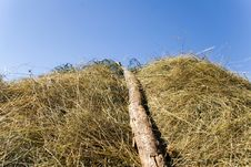 Free Top Of Hay Stack Royalty Free Stock Images - 7924379