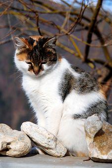 Free Sad Little Cat Stock Photo - 7924660