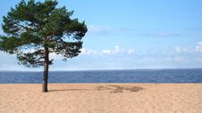 Free Summer On The Beach Royalty Free Stock Images - 7924739