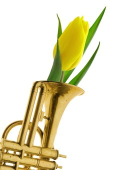 Free Yellow Tulip In Gold Trumpet Romantic Valentine Stock Images - 7924864