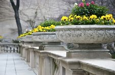 Free Flower Pots Royalty Free Stock Image - 7927436