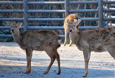 Free David S Deer Royalty Free Stock Photos - 7928648