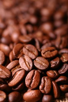 Free Coffee Bean Royalty Free Stock Image - 7929196