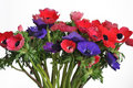Free Anemone Bouquet Stock Images - 7930794
