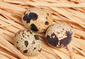 Free Three Spotted Eggs Royalty Free Stock Images - 7937149