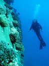 Free Diver Stock Image - 7937271