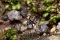 Free Black Ant Macro Royalty Free Stock Photo - 7939305