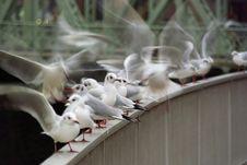 Free Seagulls Stock Image - 7933031