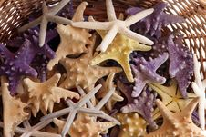 Free Basket With Starfishes Stock Photo - 7936220