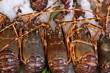 Free Fresh Lobsters Lie On Ice Royalty Free Stock Photo - 7936325