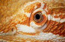 Free Eye Of A Bearded Dragon Stock Photos - 7937033