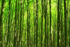Free Forest Stock Photography - 7937052