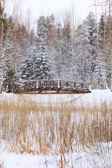 Free Small Foot-bridge On Background Nature Royalty Free Stock Photography - 7937157