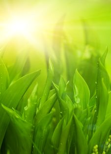 Free Fresh Green Grass Royalty Free Stock Photos - 7937428