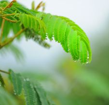 Free Fern Leaf Stock Image - 7937791