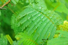 Free Fern Leaf Royalty Free Stock Photo - 7937795