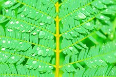 Free Detail Of A Fern Leaf Stock Images - 7937884