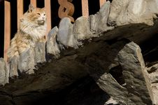 Free Cat Stock Photo - 7938450